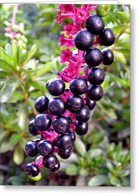 Berry Greeting Cards - Pokeberries Greeting Card by Jean Hall