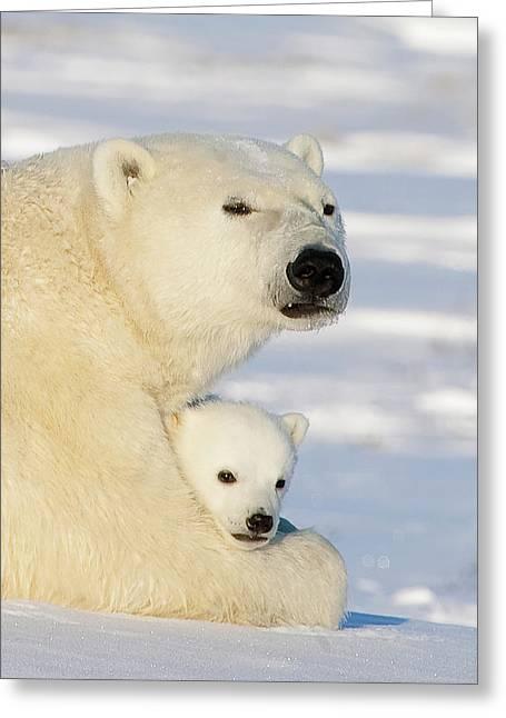 Emoting Greeting Cards - Polar Bear and 12 Week Old Cub Greeting Card by Matthias Breiter