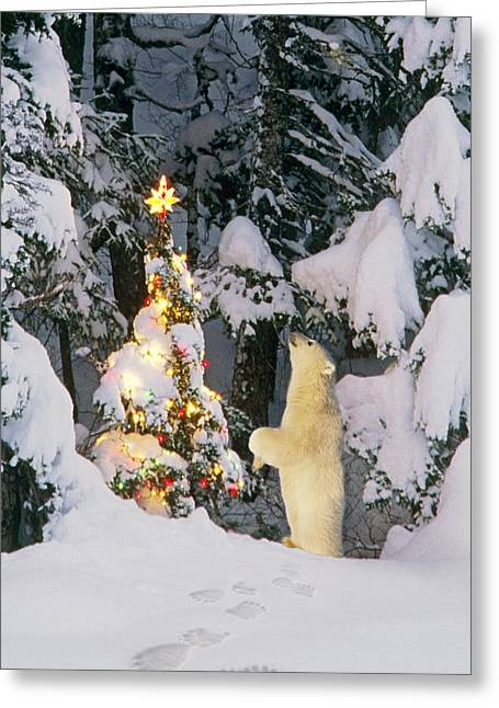Hind Greeting Cards - Polar Bear Cub Standing On Hind Legs Greeting Card by Composite Image