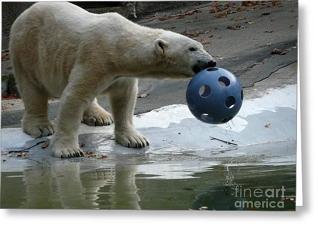 Polar Bear Play Greeting Card by Avis  Noelle