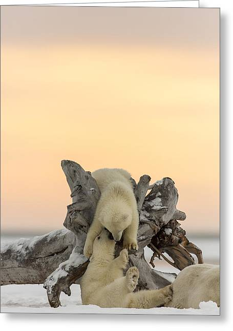 Polar Bear Playground Greeting Card by Tim Grams