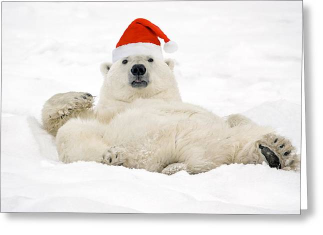 Cooling Off Greeting Cards - Polar Bear Wearing Santa Hat Lying On Greeting Card by Tom Soucek