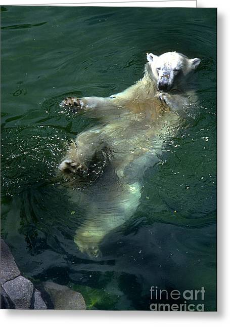 Gingrich Photo Greeting Cards - PolarFloating Greeting Card by Gary Gingrich Galleries
