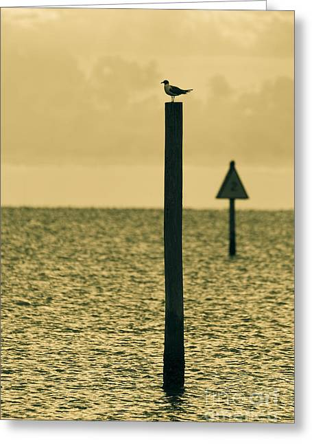 Wading Bird Greeting Cards - Pole Position Greeting Card by Marvin Spates