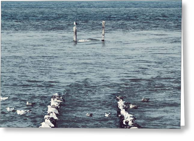 Sea Gulls Greeting Cards - Pole Position Greeting Card by Wim Lanclus