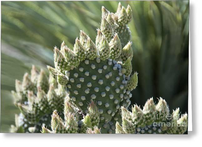 Catalina Mountains Greeting Cards - Polka Dot Prickly Pear Cactus Greeting Card by Richard & Ellen Thane