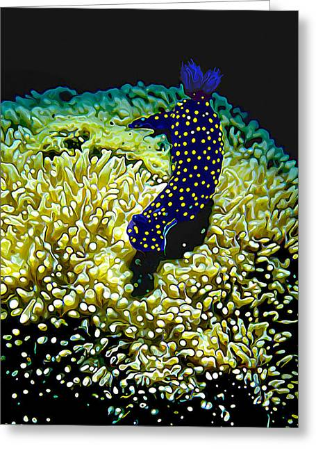 Ocean Art Photography Greeting Cards - Polkadot Nudibranch Greeting Card by Bill Caldwell -        ABeautifulSky Photography
