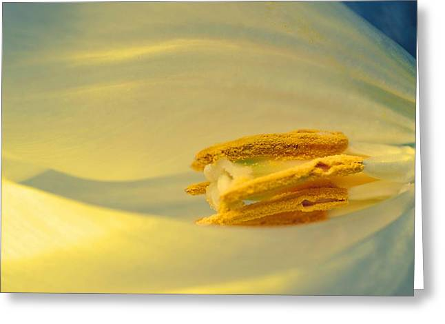 Pollen in Subtle Colors Greeting Card by Beth Akerman