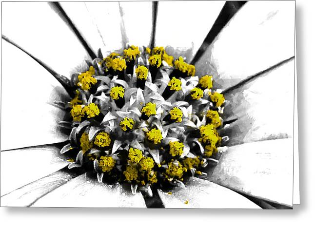 Pollen  Greeting Card by Steve Taylor