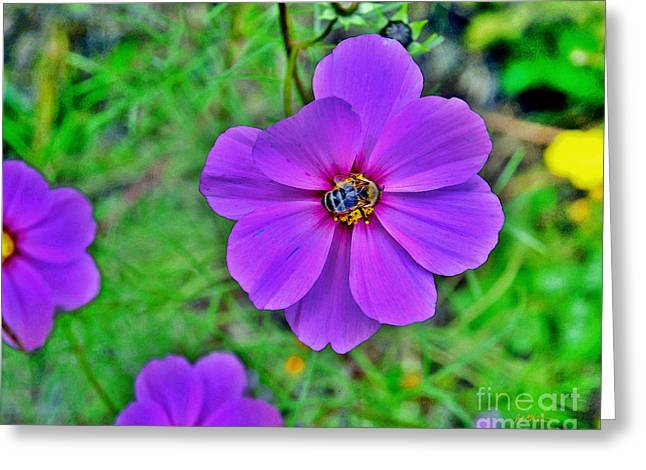 Rose Petals Greeting Cards - Pollination Greeting Card by Jeff McJunkin