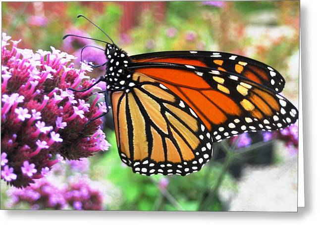 Pollination Nation 3 Greeting Card by Will Boutin Photos