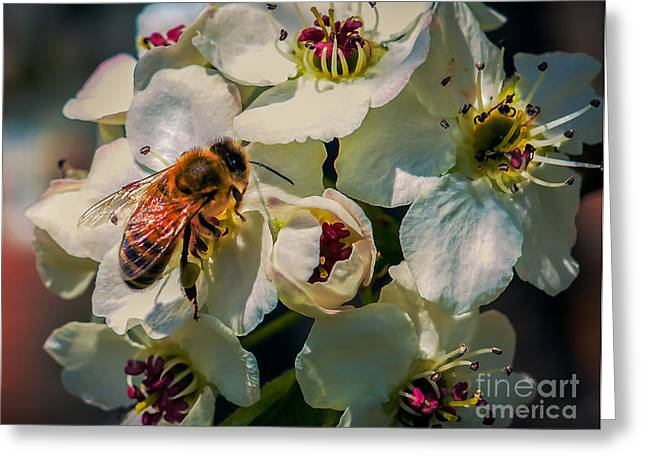 Beekeeping Greeting Cards - Pollination Greeting Card by Robert Bales