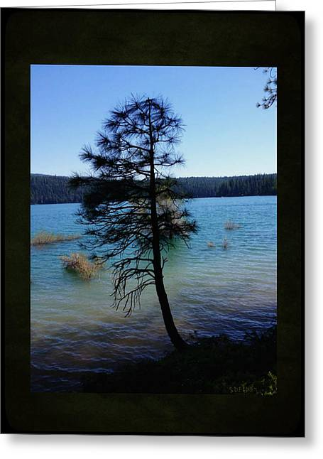 Pollock Pine Greeting Card by Sherry Flaker