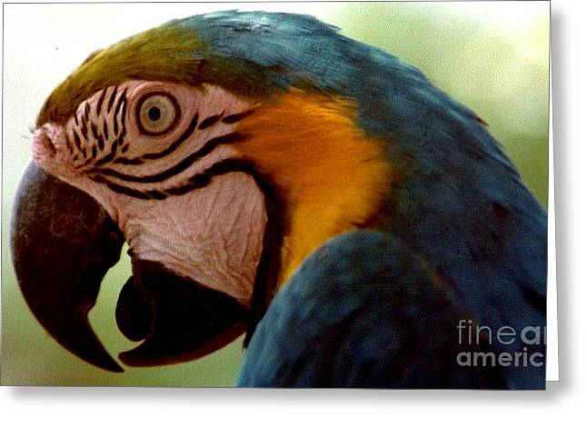 Audubon Zoo Greeting Cards - Polly Want A Cracker At The Audubon Zoo and Zoological Gardens In New Orleans Louisiana Greeting Card by Michael Hoard