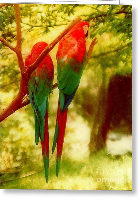 Polly Wants Two Crackers At New Orleans Louisiana Zoological Gardens  Greeting Card by Michael Hoard