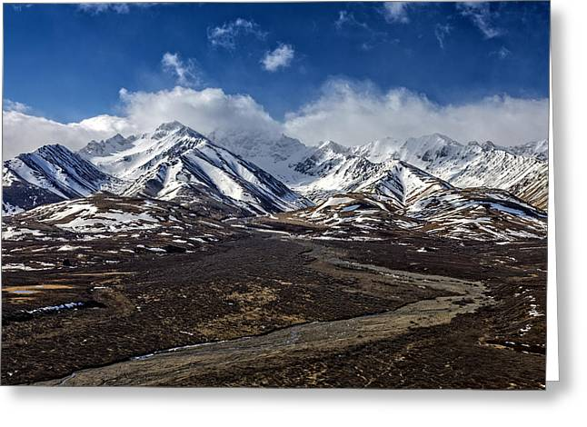 Denali National Park Greeting Cards - Polychrome Pass Greeting Card by Rick Berk