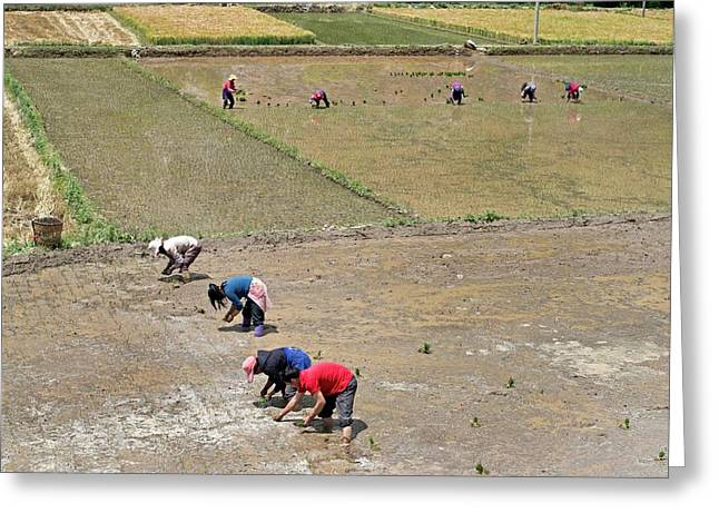 Polyculture Subsistence Farming Greeting Card by Tony Camacho