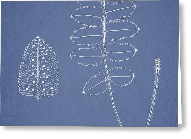 Polypodium Scottii Greeting Card by Aged Pixel