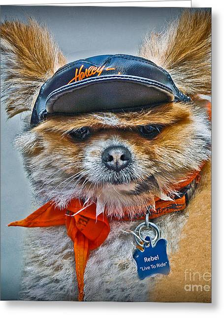 Lazy Red Dog Greeting Cards - Pomeranian Biker Dog Greeting Card by Gary Keesler