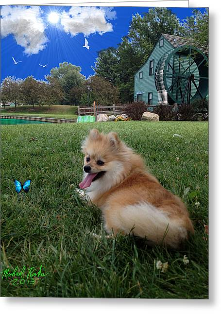 Pond In Park Greeting Cards - Pomeranian Greeting Card by Michael Rucker