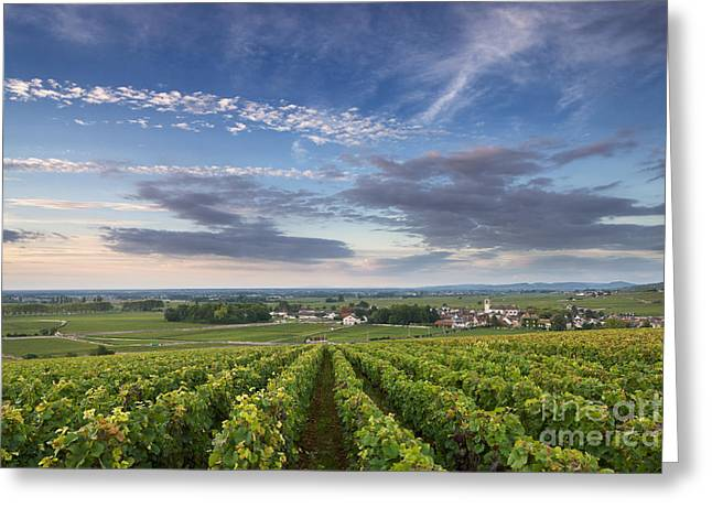Vineyard Photographs Greeting Cards - Pommard - Burgundy Greeting Card by Rod McLean