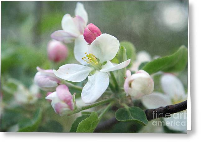 Apple Tree Greeting Cards - Pomme d Api 01 - s01bt01c Greeting Card by Variance Collections