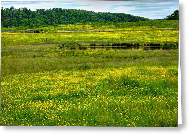 David Patterson Greeting Cards - Pond among the Buttercups Greeting Card by David Patterson
