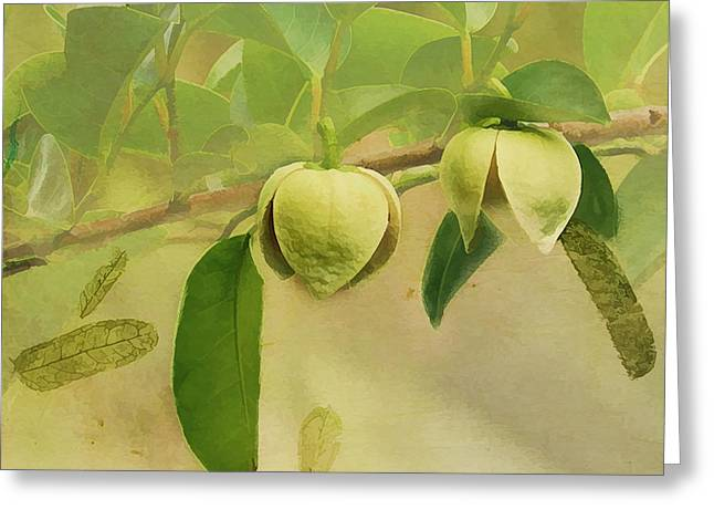 Annona Photographs Greeting Cards - Pond Apple Greeting Card by Grace Dillon