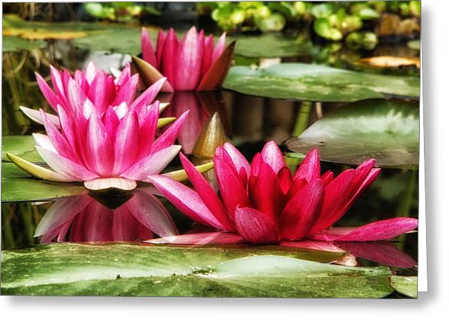 Lovely Pond Greeting Cards - Pond Beauty Greeting Card by Mountain Dreams