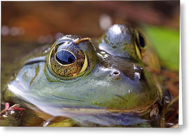 Pond Celebrity Greeting Card by Juergen Roth