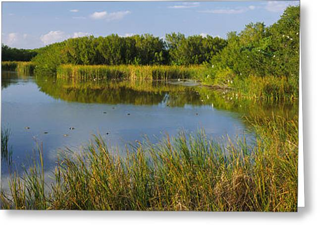Reflection Of Trees In Water Greeting Cards - Pond In A Forest, Eco Pond, Flamingo Greeting Card by Panoramic Images