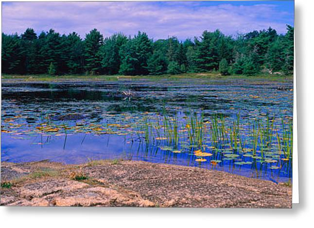 Pond Photography Greeting Cards - Pond In A National Park, Bubble Pond Greeting Card by Panoramic Images