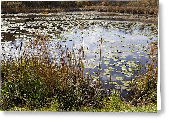 Pond In Park Greeting Cards - Pond of Lily Pads  Greeting Card by Tim  Fitzwater
