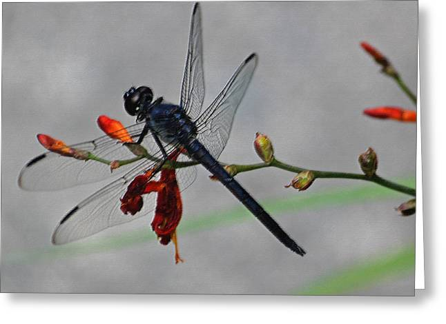 Photographs Digital Art Greeting Cards - Pond Skimmer in Pastel Greeting Card by Suzanne Gaff