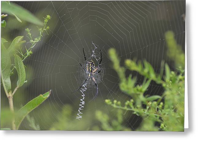 Pond Spider - 186a3 Greeting Card by Paul Lyndon Phillips