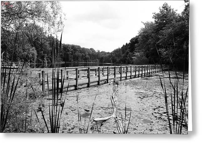Pond Trail Adventures Greeting Card by Jennifer L Washington