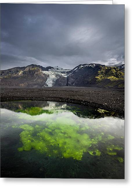 Alga Greeting Cards - Pond With Algae And Ash,from Greeting Card by Panoramic Images