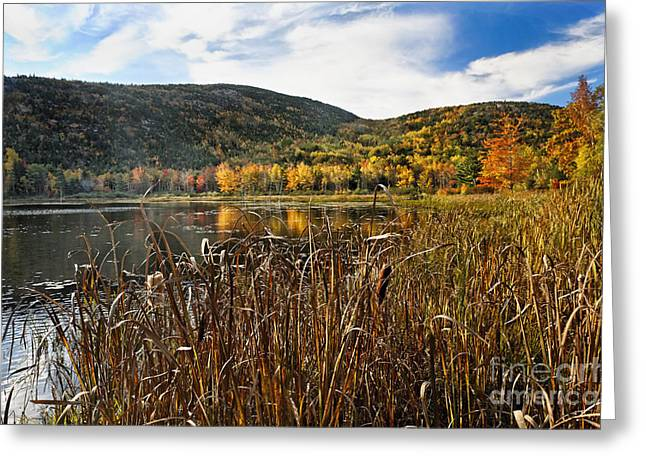 Jordan Hill Greeting Cards - Pond with Autumn Foliage  Greeting Card by George Oze