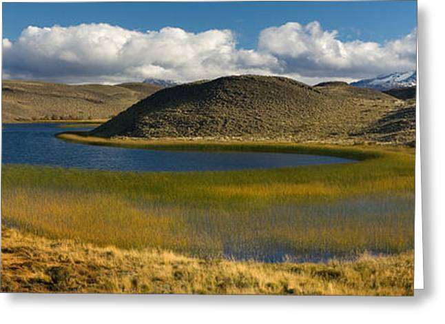 Pond In Park Greeting Cards - Pond With Sedges, Torres Del Paine Greeting Card by Panoramic Images