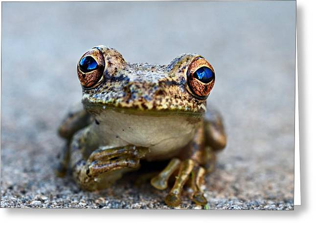 Cute Animal Portraits Greeting Cards - Pondering Frog Greeting Card by Laura  Fasulo