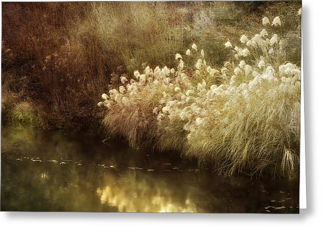 Pond's Edge Greeting Card by Julie Palencia