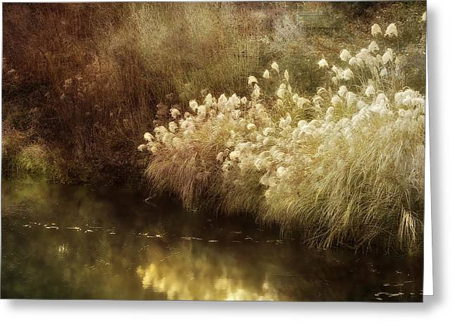 Pond In Park Greeting Cards - Ponds Edge Greeting Card by Julie Palencia