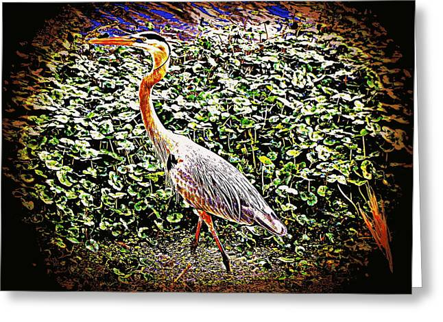 Great Blue Heron Framed Print Greeting Cards - Pondside Great Blue Heron 2 Greeting Card by Sheri McLeroy