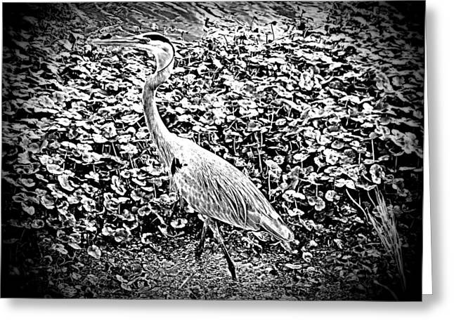 Great Blue Heron Framed Print Greeting Cards - Pondside Great Blue Heron B W Greeting Card by Sheri McLeroy