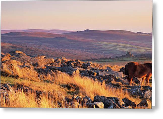 Pony At Staple Tor, Dartmoor, Devon Greeting Card by Panoramic Images