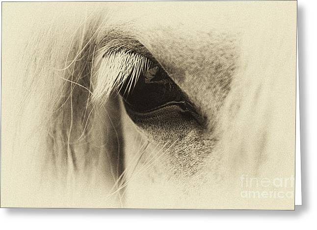Pony In Sepia  Greeting Card by Tim Gainey