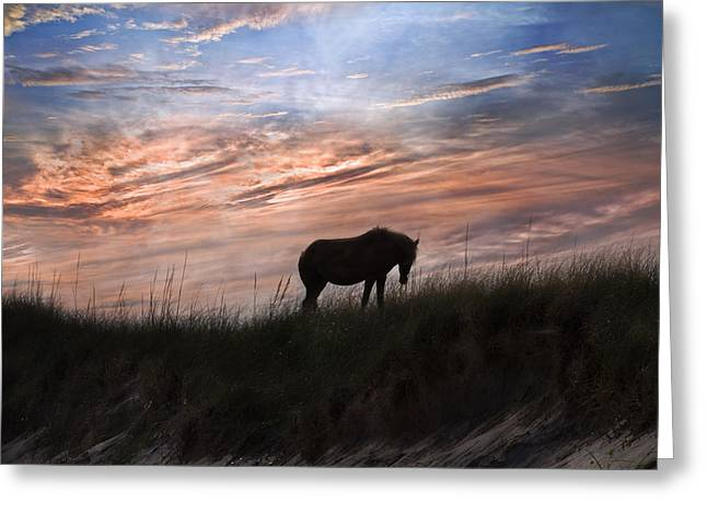 Island Life Greeting Cards - Pony on the Dunes Greeting Card by Betsy C  Knapp