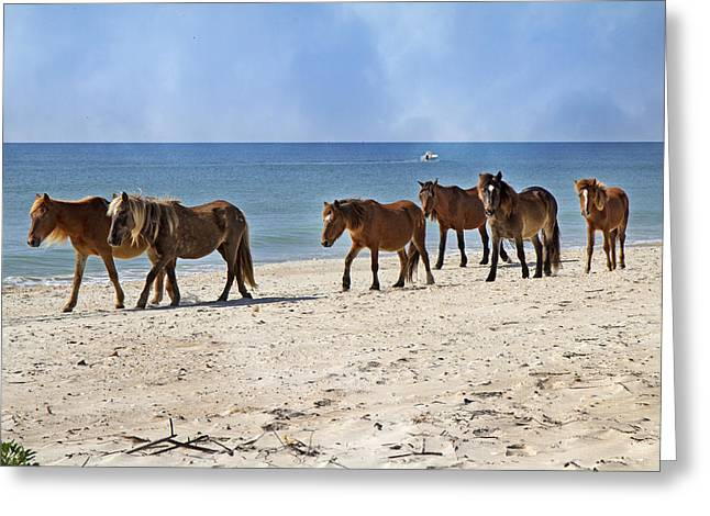 Processions Greeting Cards - Pony Procession  Greeting Card by Betsy A  Cutler