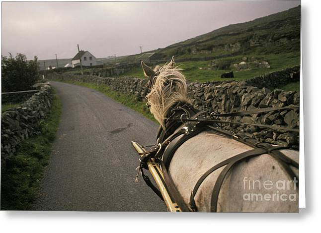 Inishmore Greeting Cards - Pony Trap Greeting Card by Ron Sanford