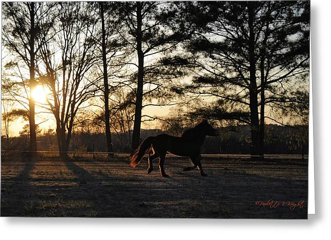 Nature Study Digital Art Greeting Cards - Ponys Evening Pasture Trot Greeting Card by Paulette B Wright